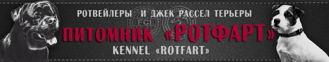 Питомник ротвейлеров и джек рассел терьеров Ротфарт г.Краснодар